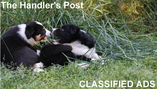 The Handler's Post